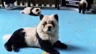 Hadirkan Anjing yang Mirip Panda, Kafe Ini Dikecam Pencinta Hewan