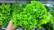 5 Sayuran untuk Diet Harian yang Seimbang dan Kaya Nutrisi
