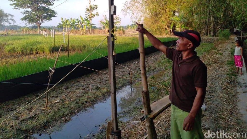 Tersengat Jebakan Tikus yang Dipasang Sendiri, Petani Lamongan Tewas
