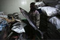 Diseterum PLN, Cold Storage Natuna Maksimal Tampung Ikan Ekspor