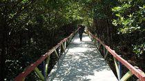 Yuk Jelajahi Kolak Sekancil, Wisata Mangrove Terlengkap di Indonesia
