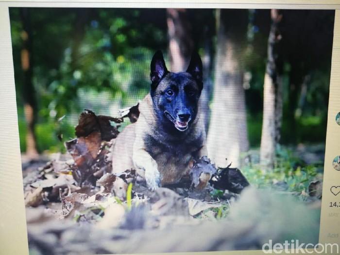 Sparta, anjing Bima Aryo mati karena sakit (Foto: Dok. Istimewa)