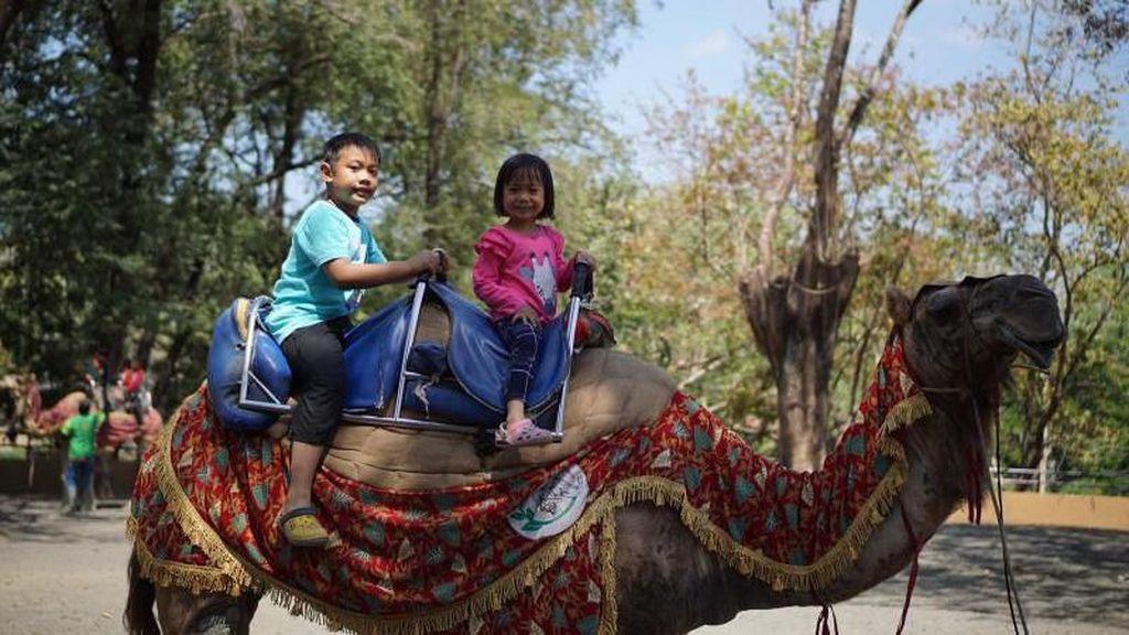 Tempat Liburan Penuh Kenangan di Solo: Taman Satwa Taru Jurug