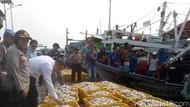 RI Punya Ikan Pesaing Salmon, Diekspor hingga ke Australia