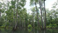 Nikmati Adventure Ala Jumanji di Hutan Bakau Rumadian