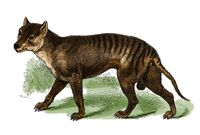 Gambaran harimau tasmania