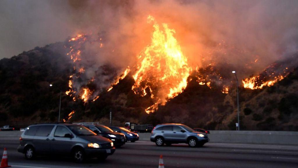 Ganasnya Kebakaran Hutan Los Angeles yang Hanguskan Rumah-rumah Mewah