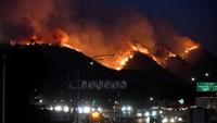 Sejumlah selebriti AS yang tinggal di kawasan terdampak kebakaran hutan terpaksa mengungsi pada tengah malam. Foto: REUTERS/Gene Blevins