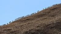 Di hari terakhirnya, turis berbondong-bondong mendaki bukit menikmati momen terakhir batu ditutup secara permanen. (Lucas Coch/AFP via Reuters)