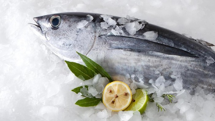 albacore on ice background