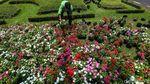 Yuk Intip Bunga Warna-warni di Taman Medan Merdeka Selatan
