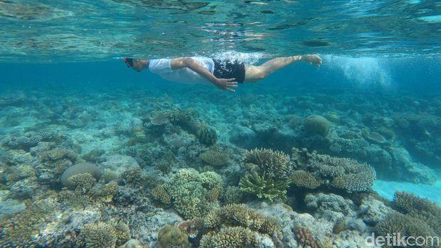 Pulau Senoa tak hanya memiliki panorama pantai yang menawan, saat menjelajah alam bawah laut pulau itu para pengunjung pun akan dibuat terpesona. Yuk, lihat.