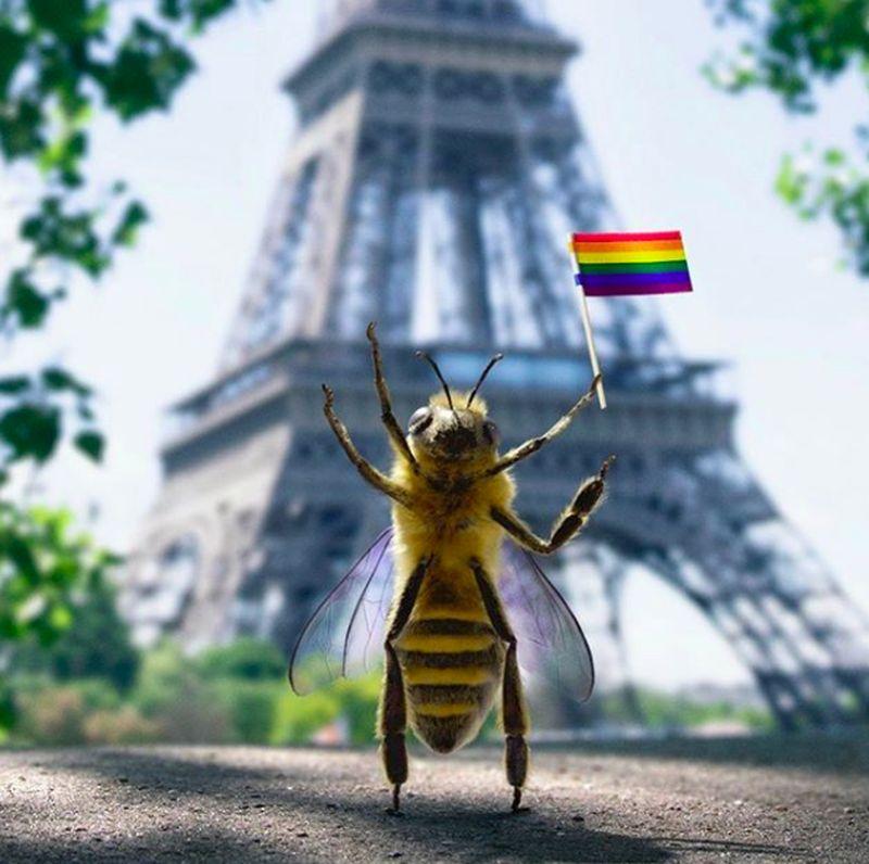 Namanya B, seekor lebah yang berasal dari Prancis. (bee_nfluencer/Instagram)