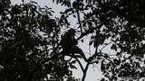 Impor Primata hingga Ular dari China Terus Naik, Segini Nilainya