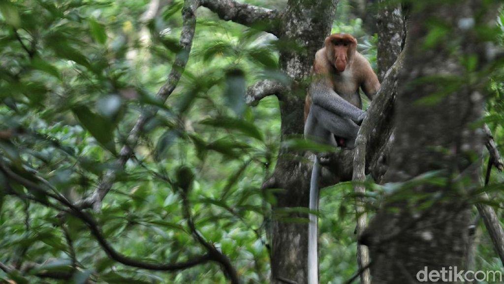 RI Mau Larang Impor Hewan Hidup dari China, Ada Primata hingga Ular