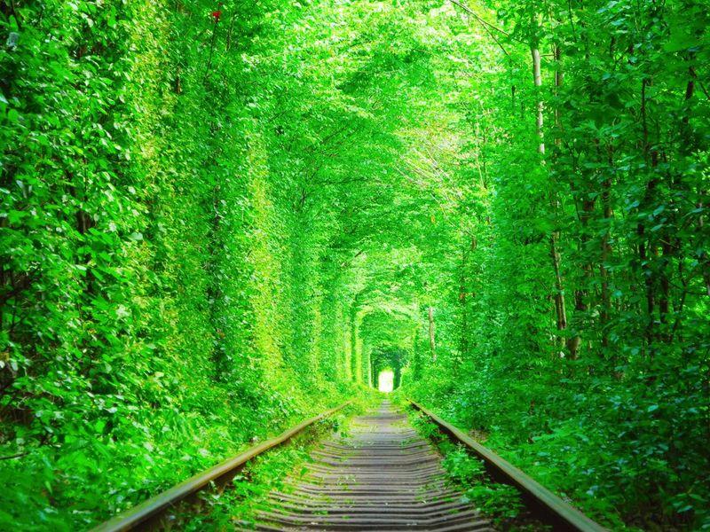 The Tunnel of Love adalah terowongan yang dikenal sangat romantis di dunia. Berada di Kleven, Ukraina, terowongan ini berhasil mencuri hati setiap orang, tak terkecuali wisatawan (iStock)