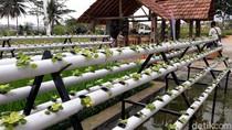Pikat Anak Muda untuk Bertani Lewat Jogja Youth Farming