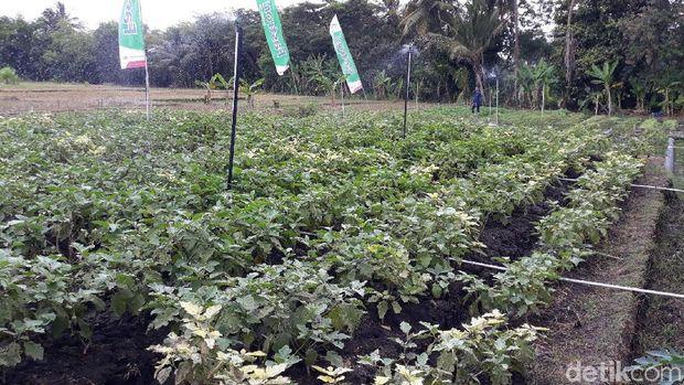 Jogja Youth Farming di Bantul