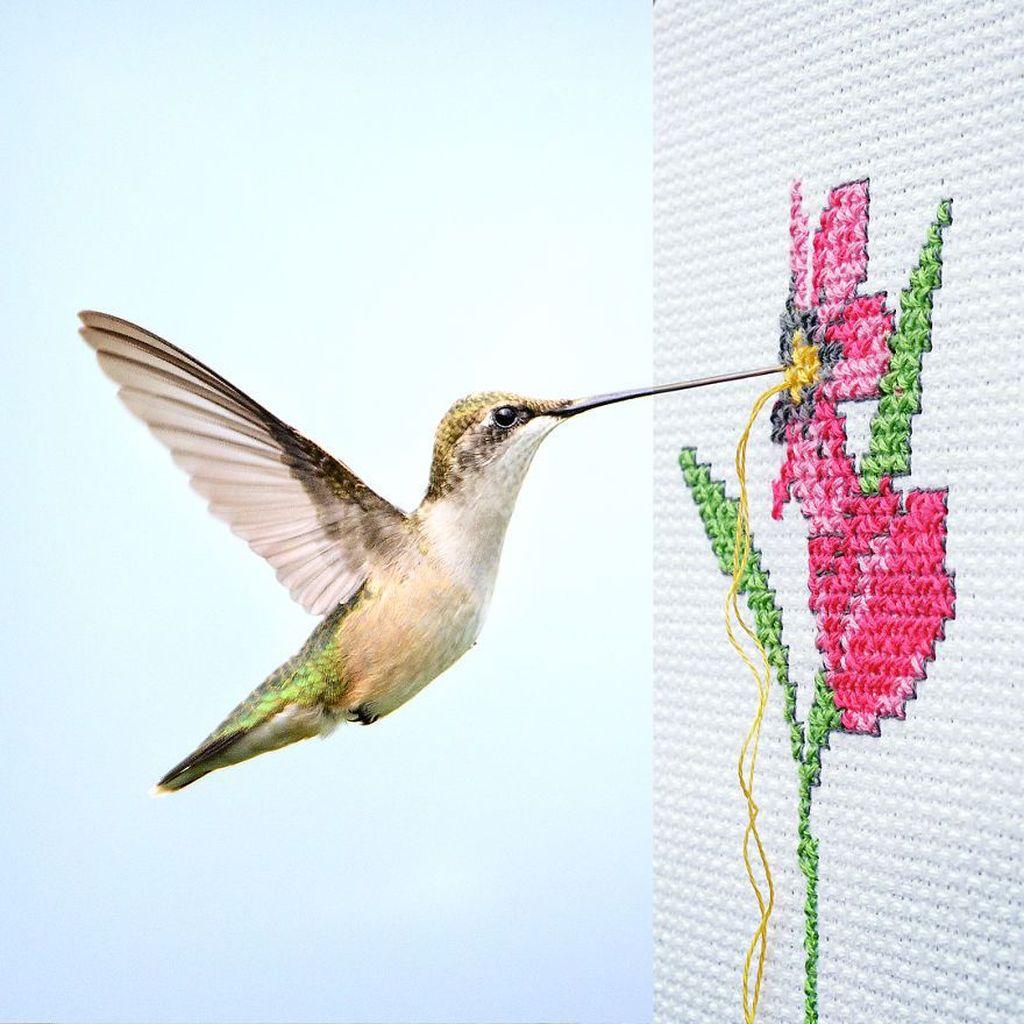 Burung menyulam. Foto: Stephen Mcmennamy