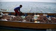 Mengintip Budidaya Rumput Laut di Nunukan