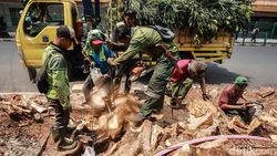 Ahli Nilai Penataan Trotoar DKI Semestinya Tak Perlu Menebang Pohon