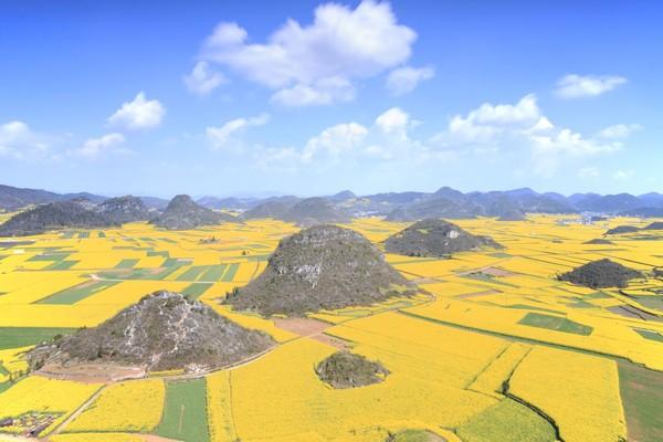 Hal menarik yang akan diceritakan adalah Lembah yang ada si Luoping. Sebagai salah satu perkebunan bunga canola, Luoping memberikan pemandangan yang berbeda untuk wisatawan. (iStock)