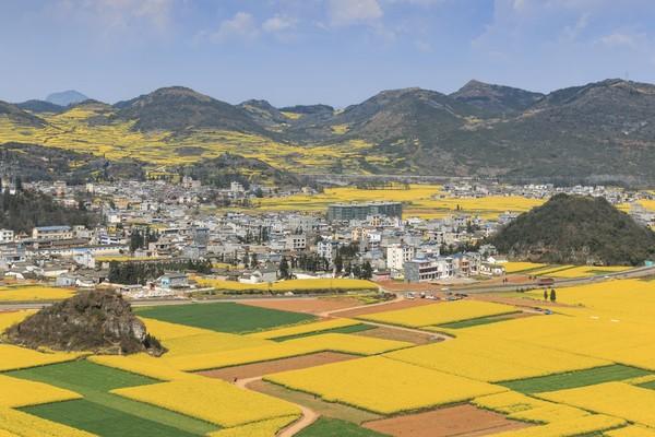 Saking luasnya, tempat ini mendapat predikat sebagai taman bunga natural terbesar di dunia. Sudah jadi yang terbesar, berwarna kuning pula! (iStock)