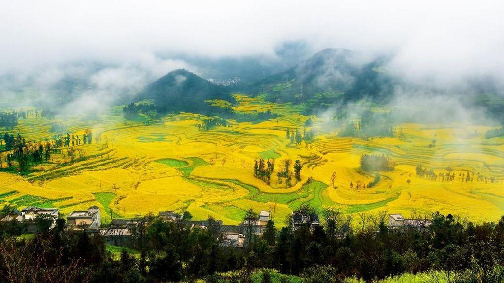Mungkin Ini Lembah Paling Kuning di Dunia, Setuju Nggak?