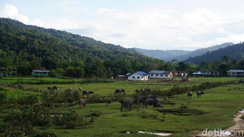 Desa Parupay yang cantik. (Syanti Mustika/detikcom)