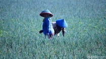Gawat! RI Bisa Krisis Petani 15 Tahun Mendatang