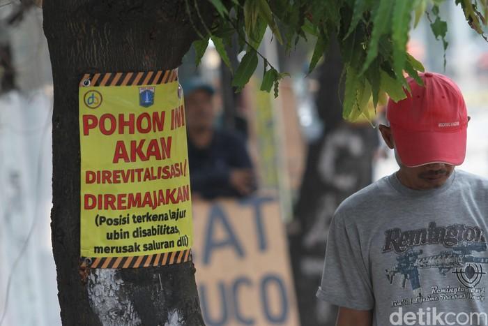 Pohon di Kramat, Senen, Jakarta Pusat, yang akan ditebang Pemprov DKI. (Rifkianto Nugroho/detikcom)
