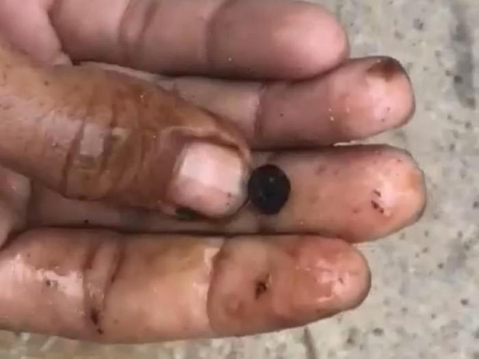Foto: Screenshot video temuan batu hitam di perut ikan