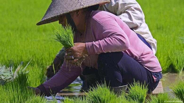 Laporan ADB: 22 Juta Orang Indonesia Menderita Kelaparan