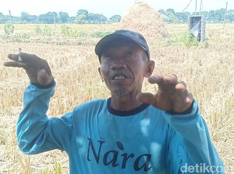 Kesaksian Warga soal Buruh Tani yang Jatuh ke Mesin Pemanen Padi