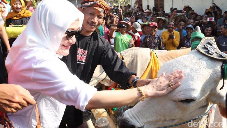 Bedholan Lembu, Tradisi Kirab Sapi di Bojonegoro
