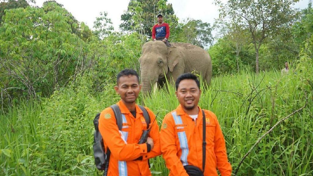 Gajah Bantu PLN Banda Aceh Terangi Serambi Mekah