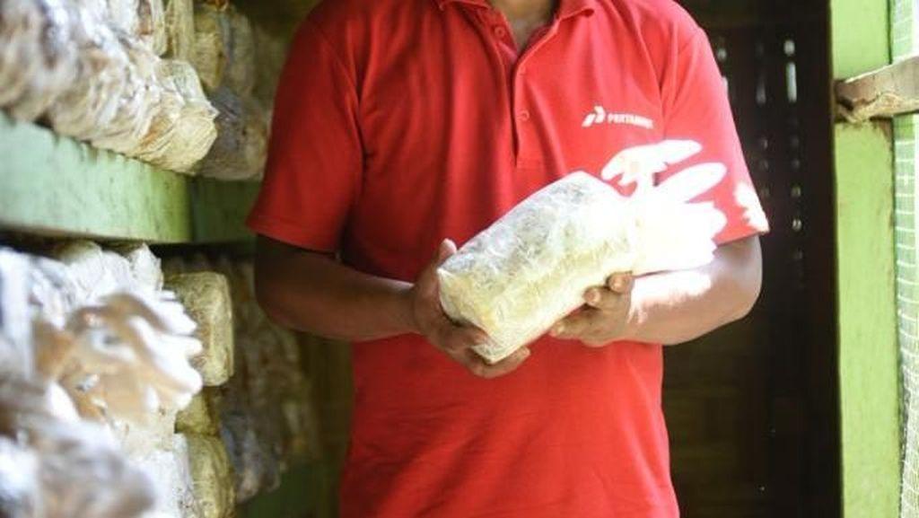 Manfaatkan Limbah Sawit, Warga Aceh Tamiang Sukses Budidayakan Jamur