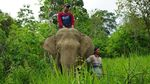 Gajah dan Perempuan di Balik Terangnya Aceh