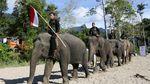 Di Aceh, Peringatan Hari Pahlawan Digelar Bersama Gajah