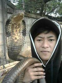 Penampakan Ular King Kobra yang Tewaskan Rendy di Depok