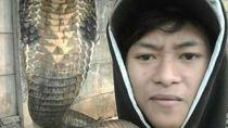 Pelihara King Cobra Berujung Hilang Nyawa