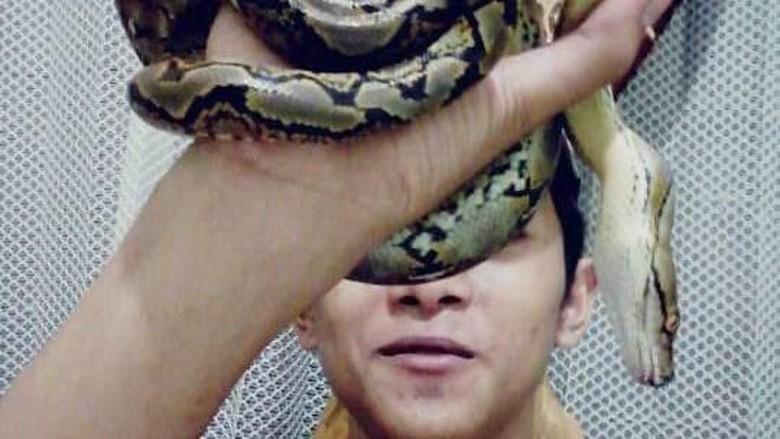 Polisi: King Kobra yang Tewaskan Rendy Dibawa Komunitas Pecinta Reptil