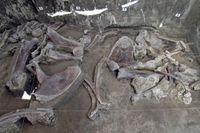 Ratusan Kerangka Mammoth Ditemukan di Meksiko