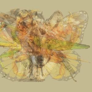 Tes Kepribadian: Belalang, Kupu-kupu atau Ayam yang Pertama Kali Dilihat?