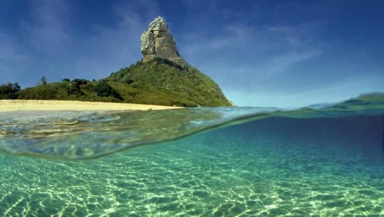 Sea turtle swimming in the sea of Fernando de Noronha, on the Brazilian coast, in an area of environmental protection.