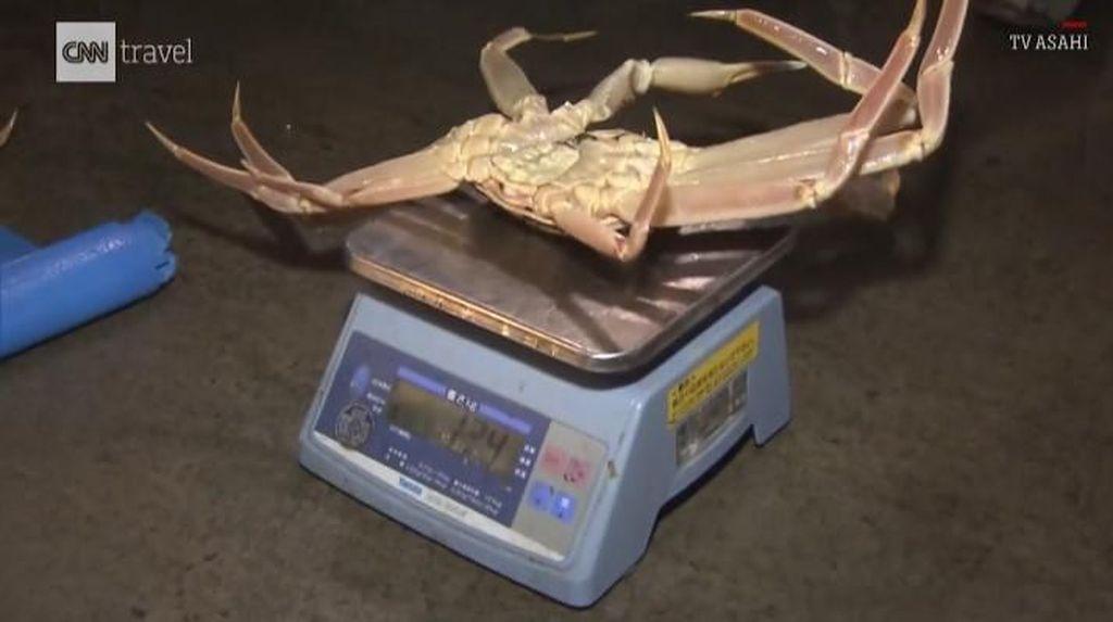 Kepiting Jepang Mewah Seharga Mobil hingga Pola Makan Sehat Rasulullah