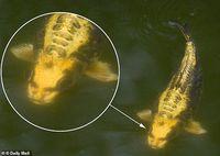 Heboh Penemuan Ikan 'Berwajah Manusia'