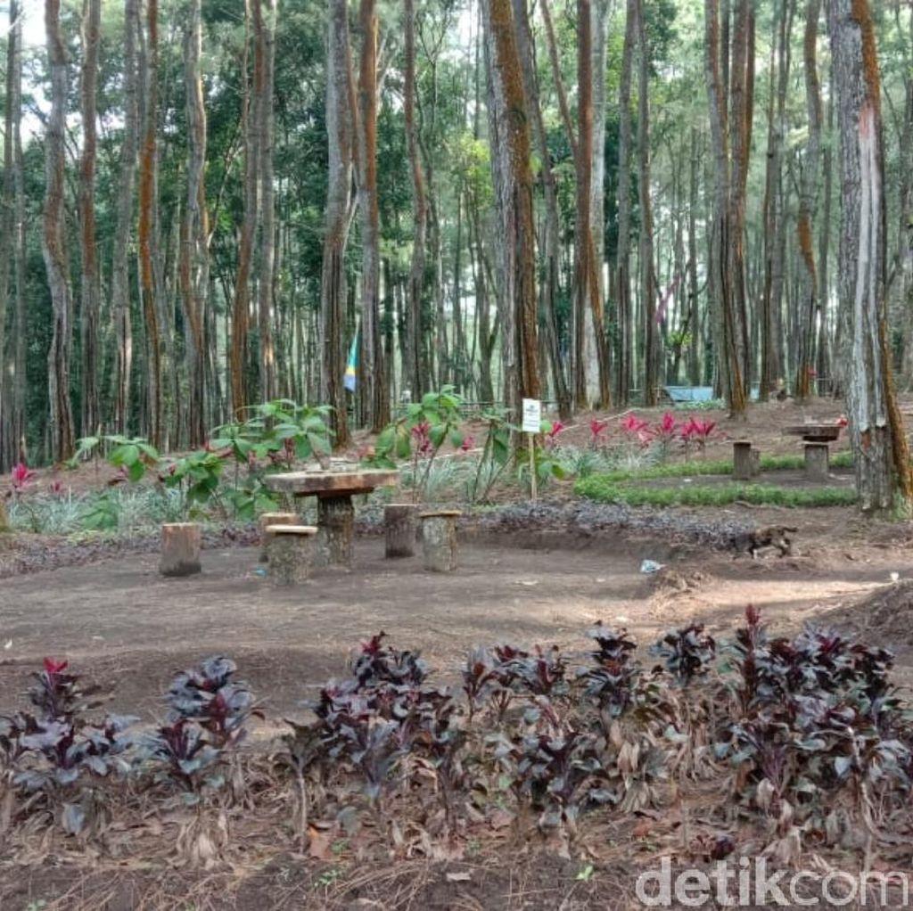 Wow, 13 Ribu Hektare Lahan Perhutani di Banyuwangi Resmi Digarap Warga