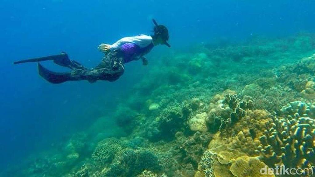 Foto: Surga Bawah Laut yang Tersembunyi di Sulawesi Barat