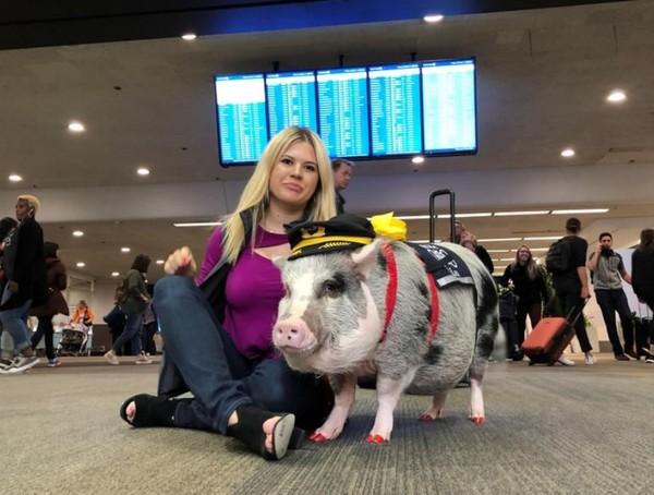 LiLou berperan sebagai hewan terapi di Bandara Internasional San Francisco. Dia membantu para penumpang yang takut atau trauma untuk terbang. (Jane Ross/Reuters)
